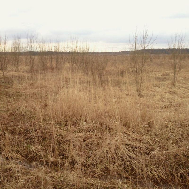 Вид на наше поле